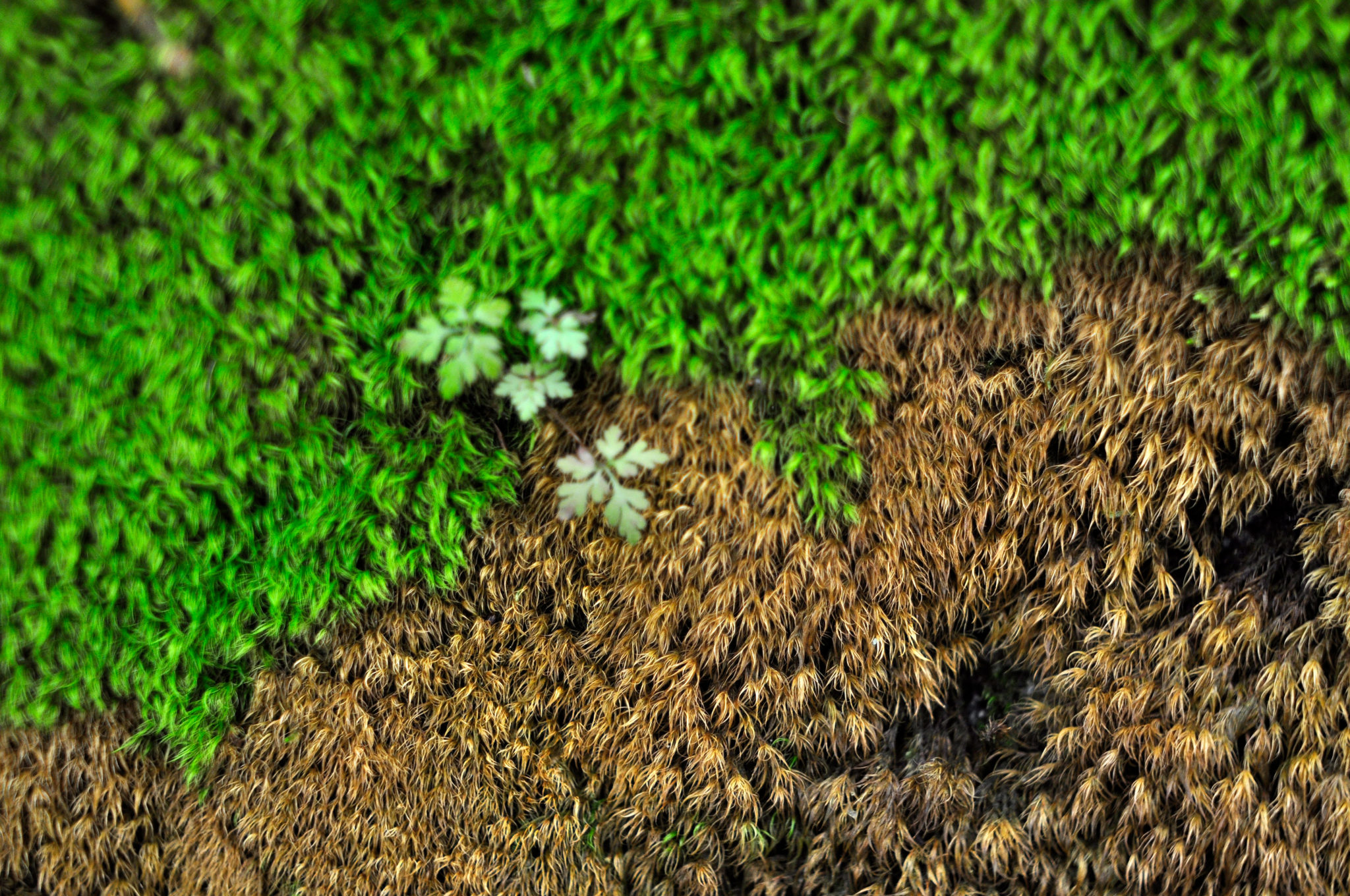 Moss at Freija