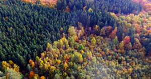 Freija Forest