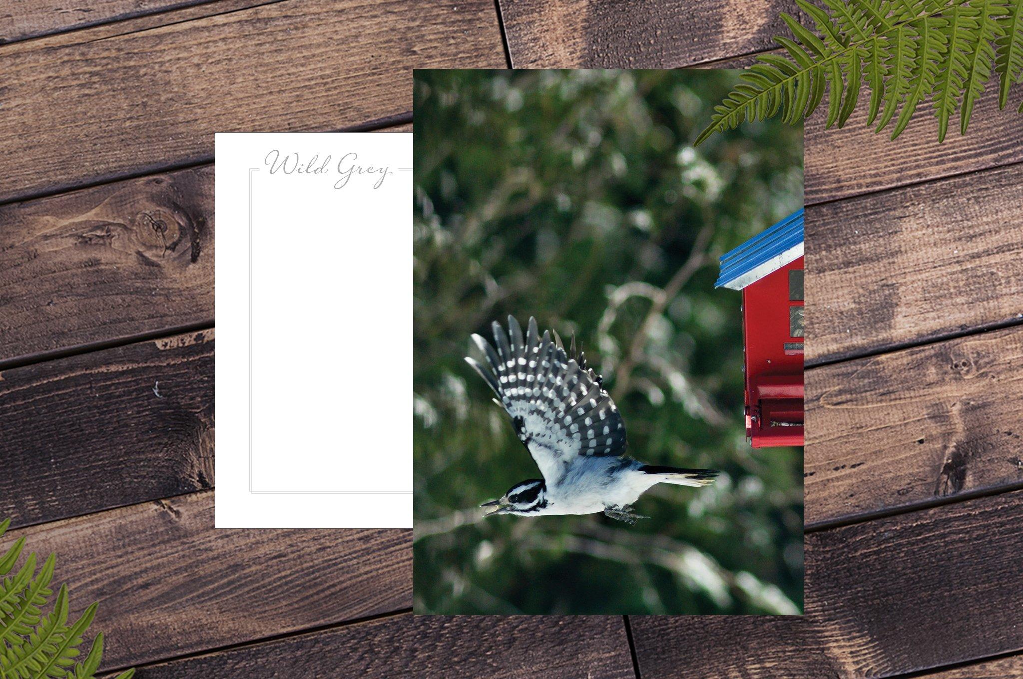 Wild Grey Postcards