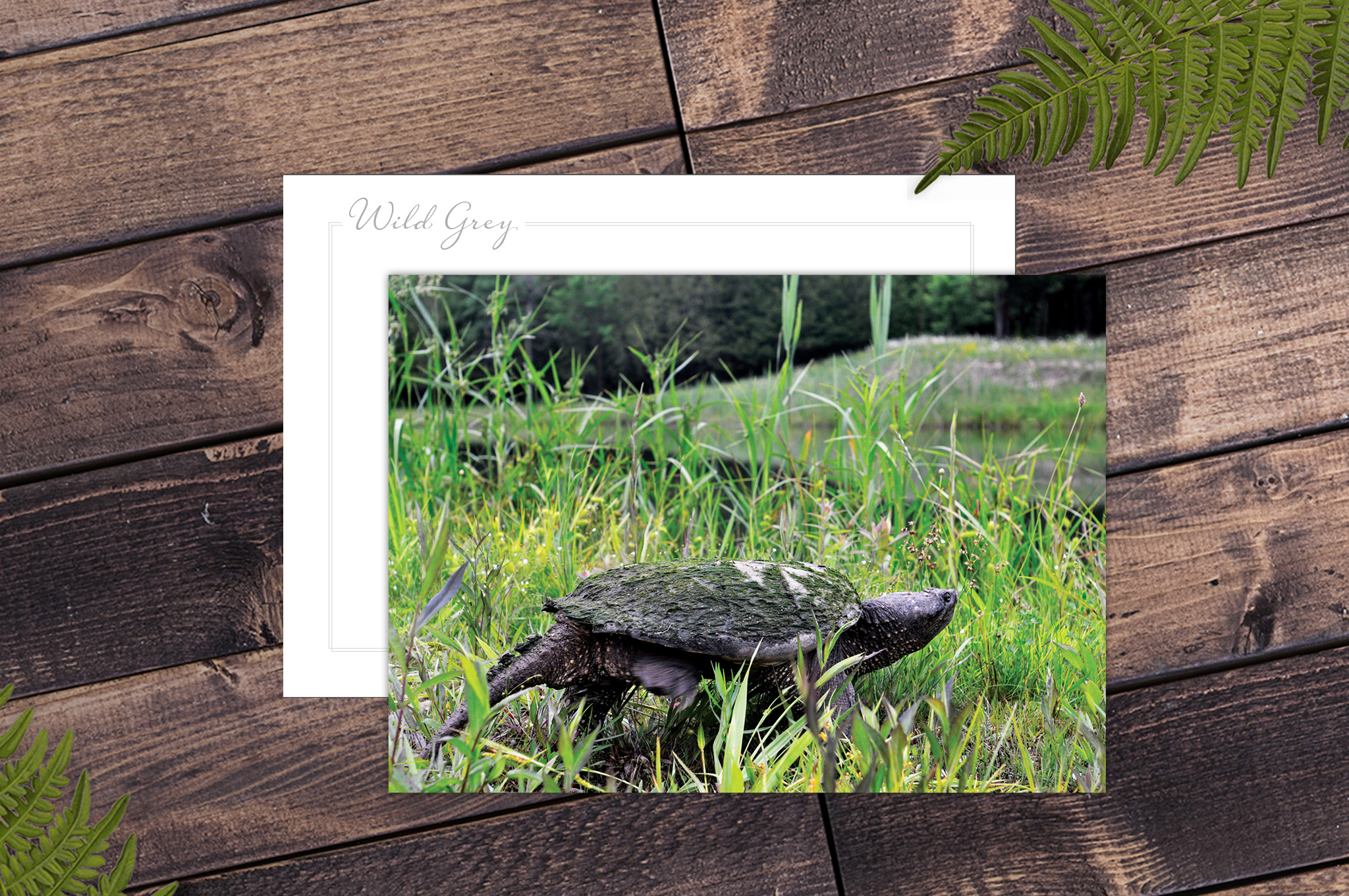 Wild Grey – a collection of premium small-run postcards featuring unique wildlife and beautiful nature of Grey County.