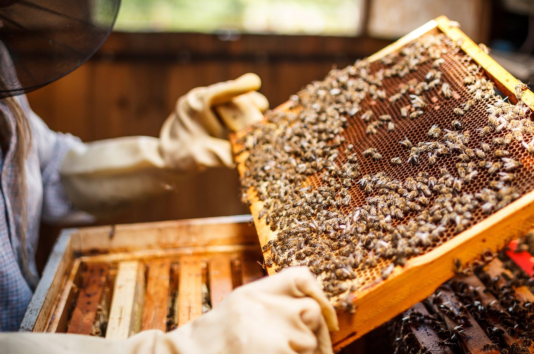 Beekeeping Experience